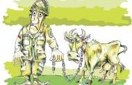 Jaunasis ūkininkas karvės prie tanko nepririš