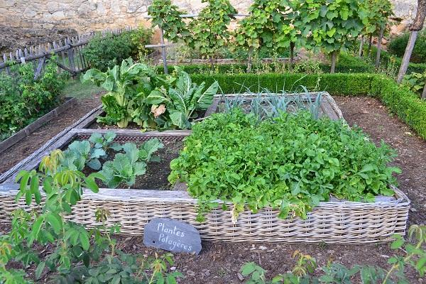 Racionalus daržas: ką auginti?