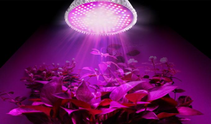 Lempos augalų auginimui: kas tai ir kaip išsirinkti?